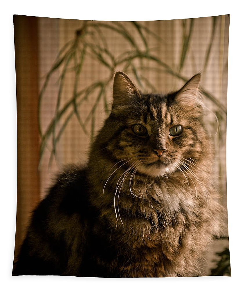 Kitten Tapestry featuring the photograph Handsome Harv by Trish Tritz