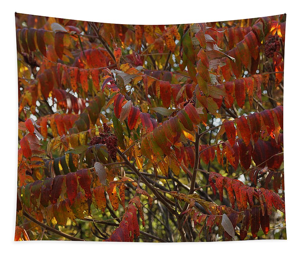 Nature Tapestry featuring the photograph Hanging Out Clothes by Susan Capuano