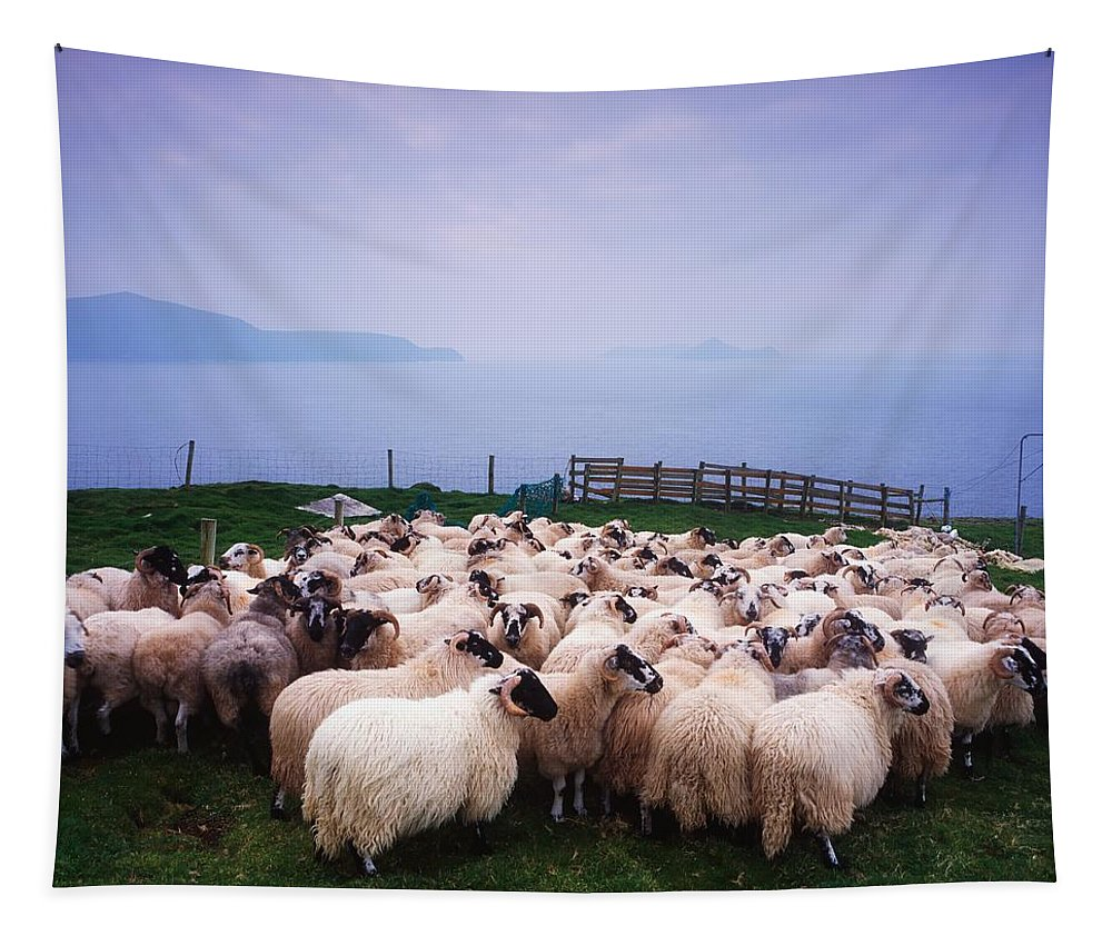 Animals Tapestry featuring the photograph Herding Sheep, Inishtooskert, Blasket by The Irish Image Collection