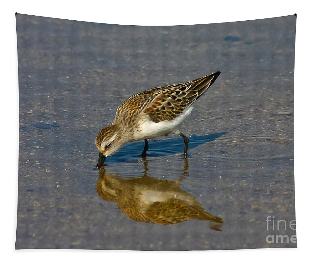 Western Sandpiper Tapestry featuring the photograph Here's Lookin At You by Mitch Shindelbower