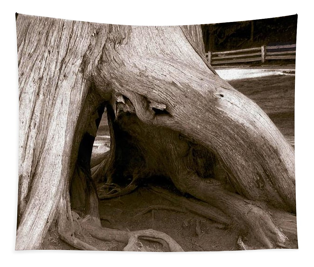 Hollow Tree Tapestry featuring the photograph Hollow Tree by Will Borden