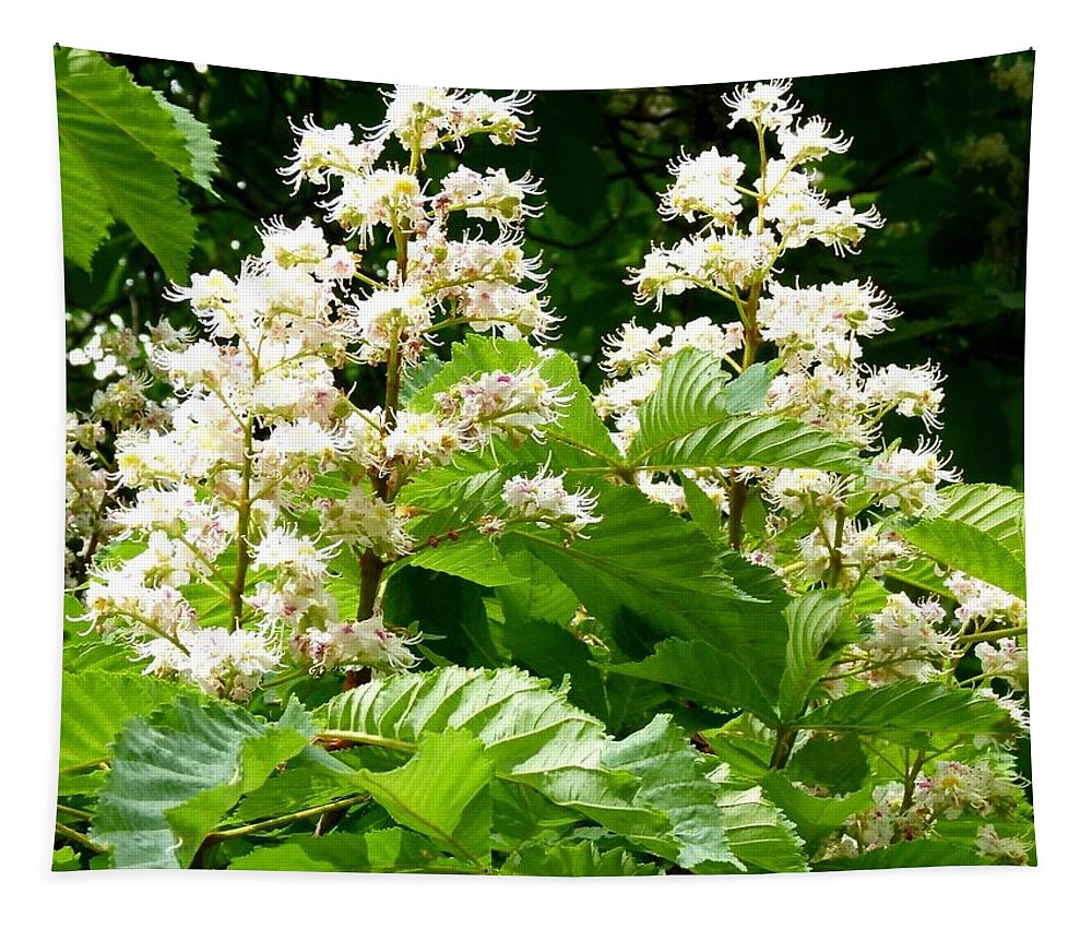 Horse Chestnut Blossoms Tapestry featuring the photograph Horse Chestnut Blossoms by Will Borden