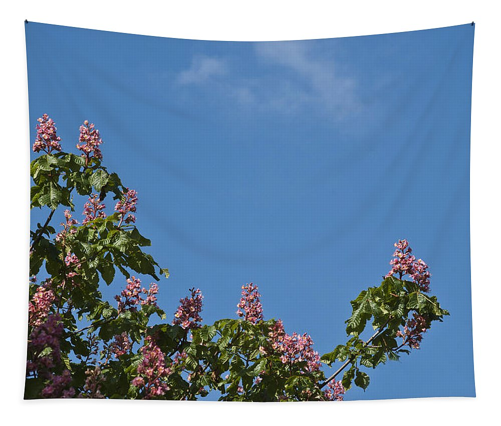 Horse Chestnut Tree Tapestry featuring the photograph Horse Chestnut by Steve Purnell