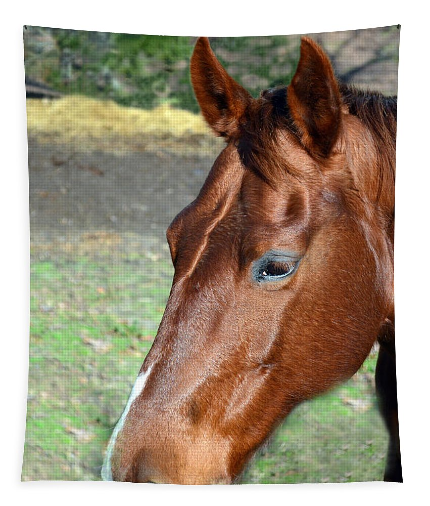 Horse Tapestry featuring the photograph Horse Portrait2 by Sandi OReilly