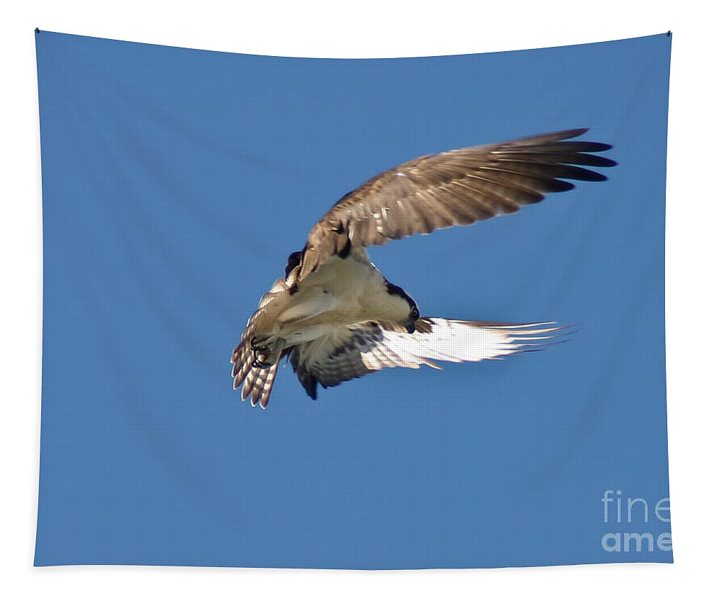 Osprey Tapestry featuring the photograph Hover Mode by Mitch Shindelbower