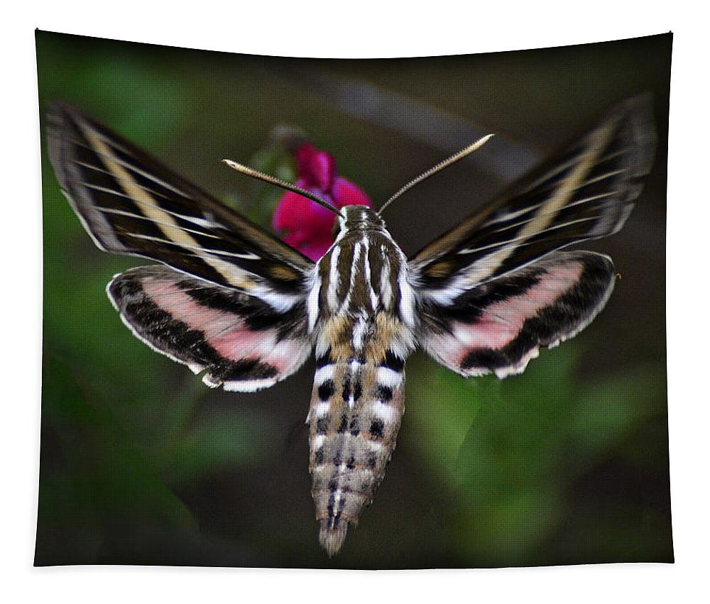 Hummingbird Moth Tapestry featuring the photograph Hummingbird Moth - White-lined Sphinx Moth by Saija Lehtonen