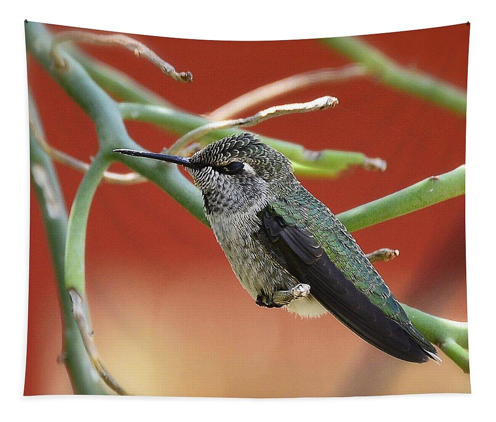 Anna's Hummingbird Tapestry featuring the photograph Hummingbird Nap Time by Saija Lehtonen