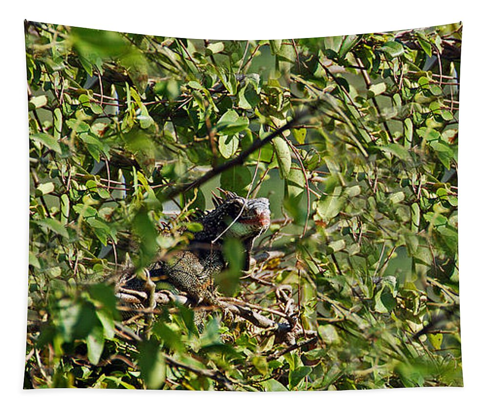 Iguana. Iguanas Tapestry featuring the photograph Iguana Hiding In The Bushes by Aimee L Maher ALM GALLERY
