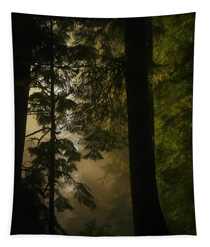 Forest Tapestry featuring the photograph In Soft Shades Of Paradise by Jeff Swan