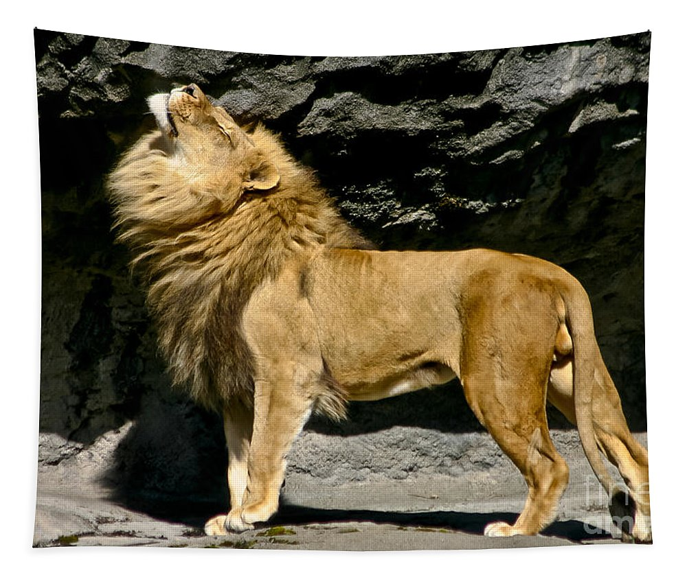 African Lyon Tapestry featuring the photograph It's Good To Be The King by Mitch Shindelbower