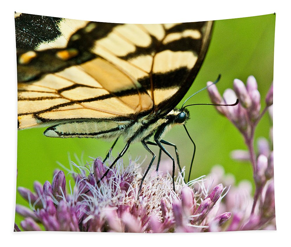 Butterflies Tapestry featuring the photograph Joe Pye Butterfly by Craig Leaper