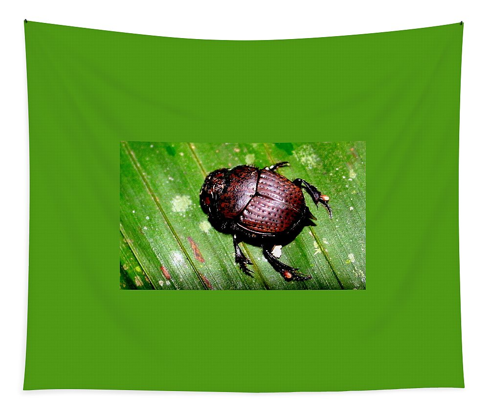 Beetle Tapestry featuring the photograph Jungle Beetle by Laurel Talabere