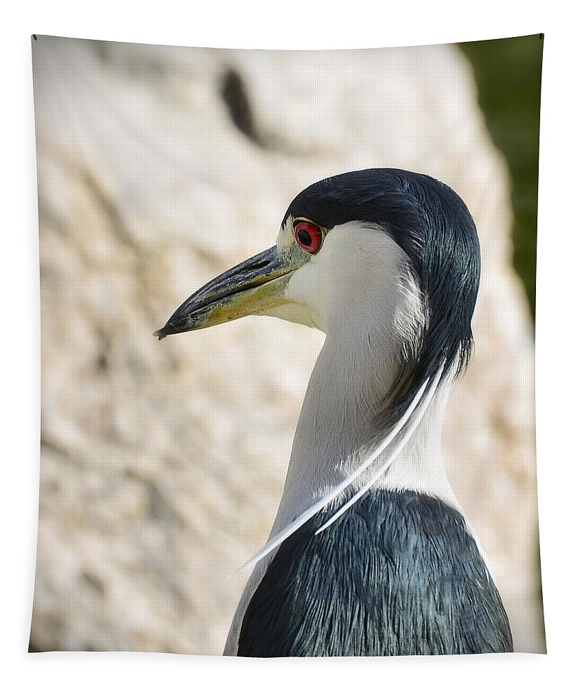 Night Heron Tapestry featuring the photograph Just Over My Shoulder by Saija Lehtonen