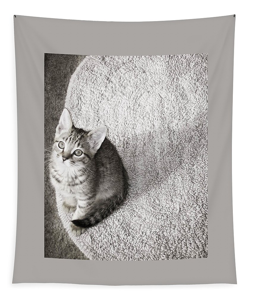 Kitty Tapestry featuring the photograph Kitty's Shadow by Trish Tritz