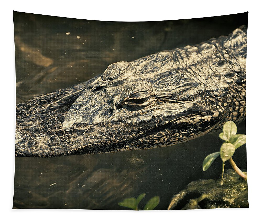 Alligator Tapestry featuring the photograph Lady Alice Queen Of The Lake by Joan Carroll