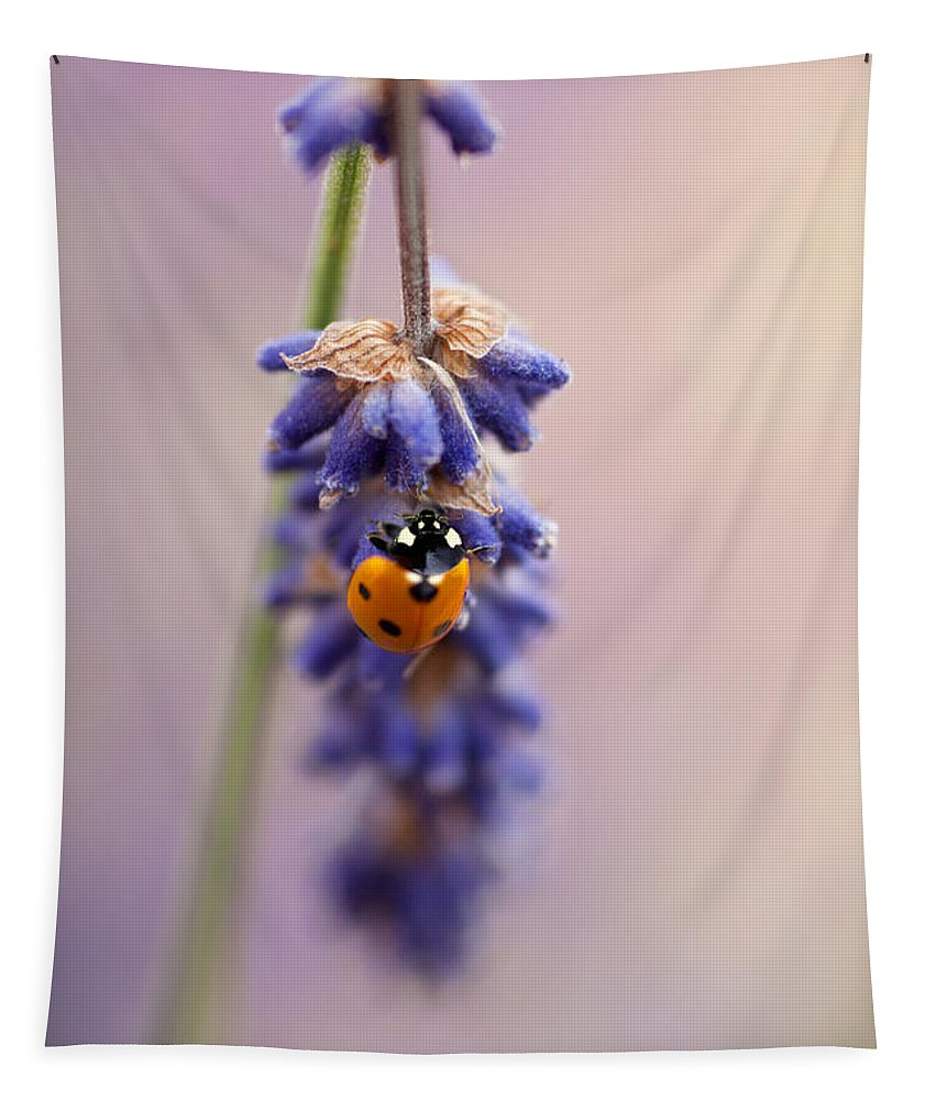 Ladybird Tapestry featuring the photograph Ladybird And Lavender by John Edwards