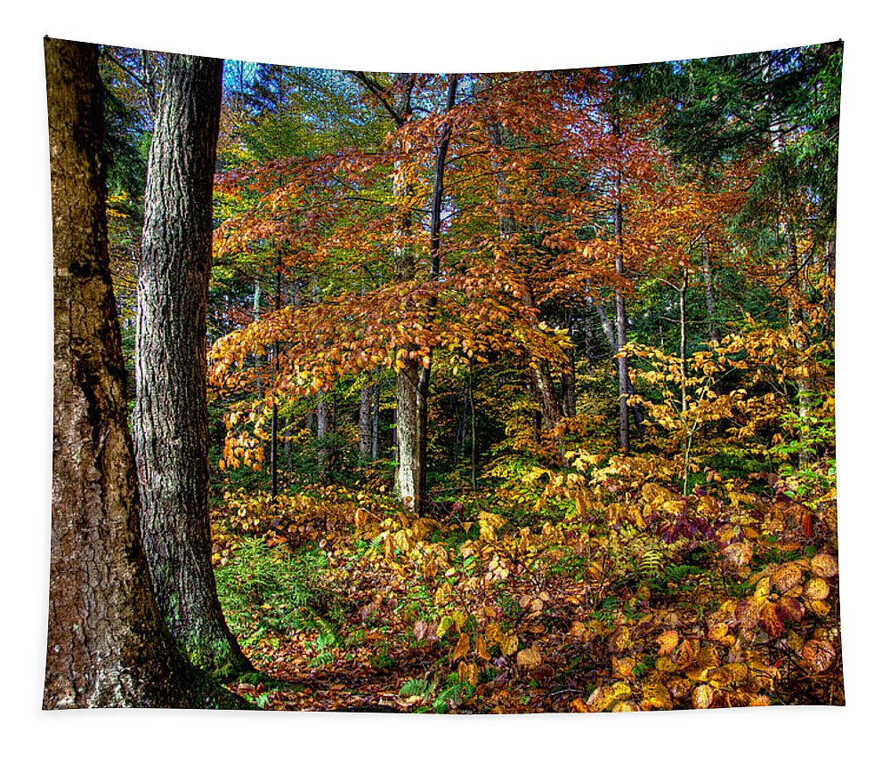 Adirondack's Tapestry featuring the photograph Leaving Cary Lake by David Patterson