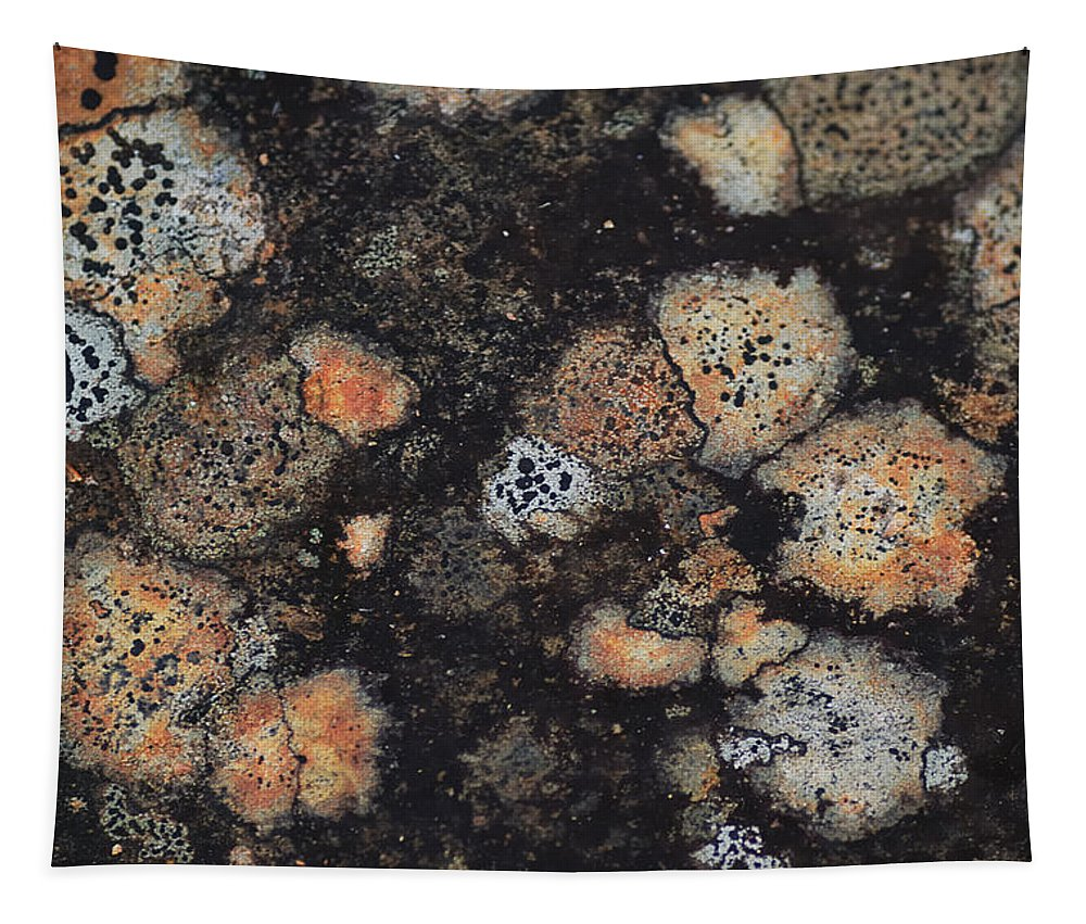 Abstract Tapestry featuring the photograph Lichen Abstract by Susan Capuano