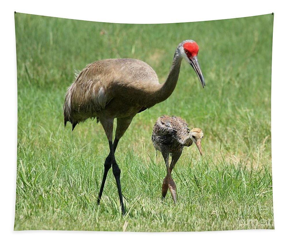 Sandhill Crane Tapestry featuring the photograph Like Father by Carol Groenen