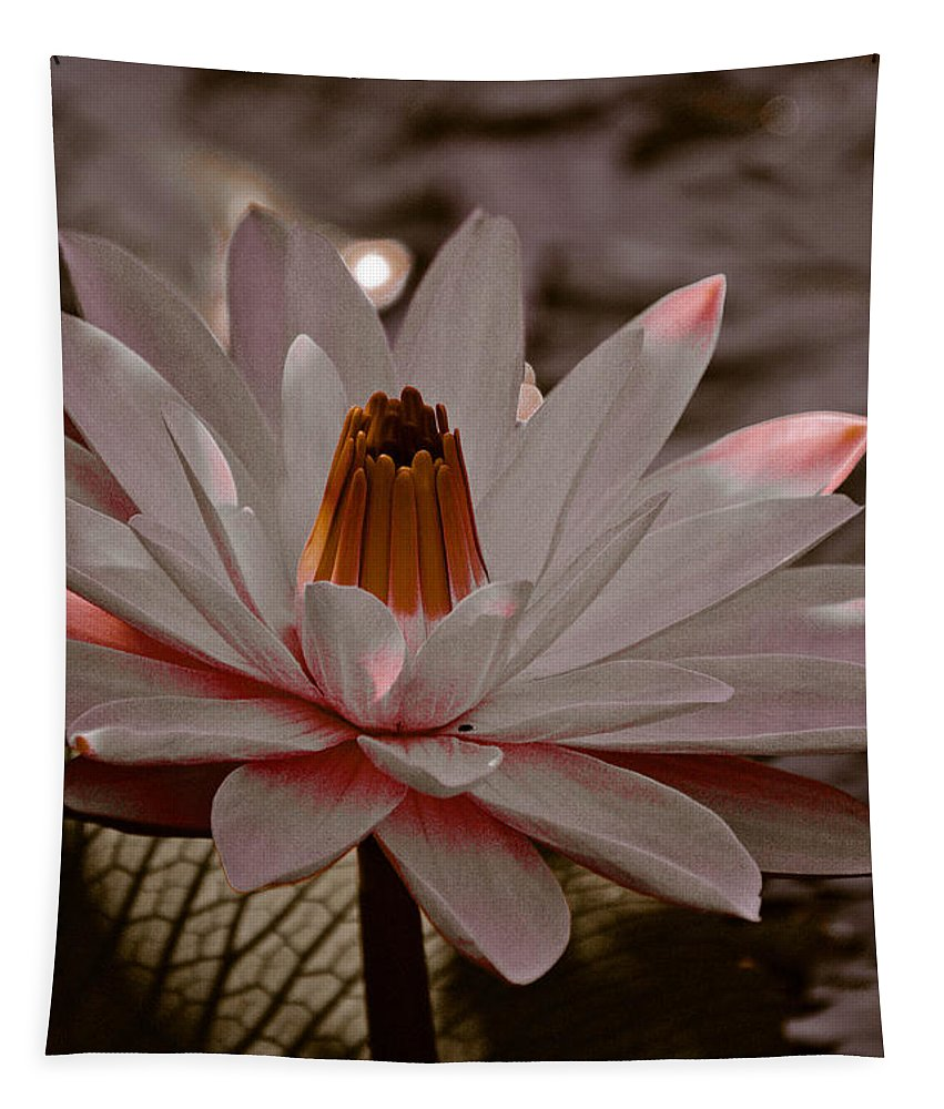 Lily Tapestry featuring the photograph Lil Peachy by Trish Tritz