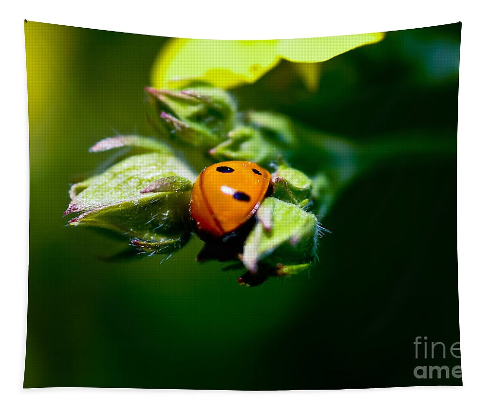 Ladybug Tapestry featuring the photograph Little Lady by Mitch Shindelbower