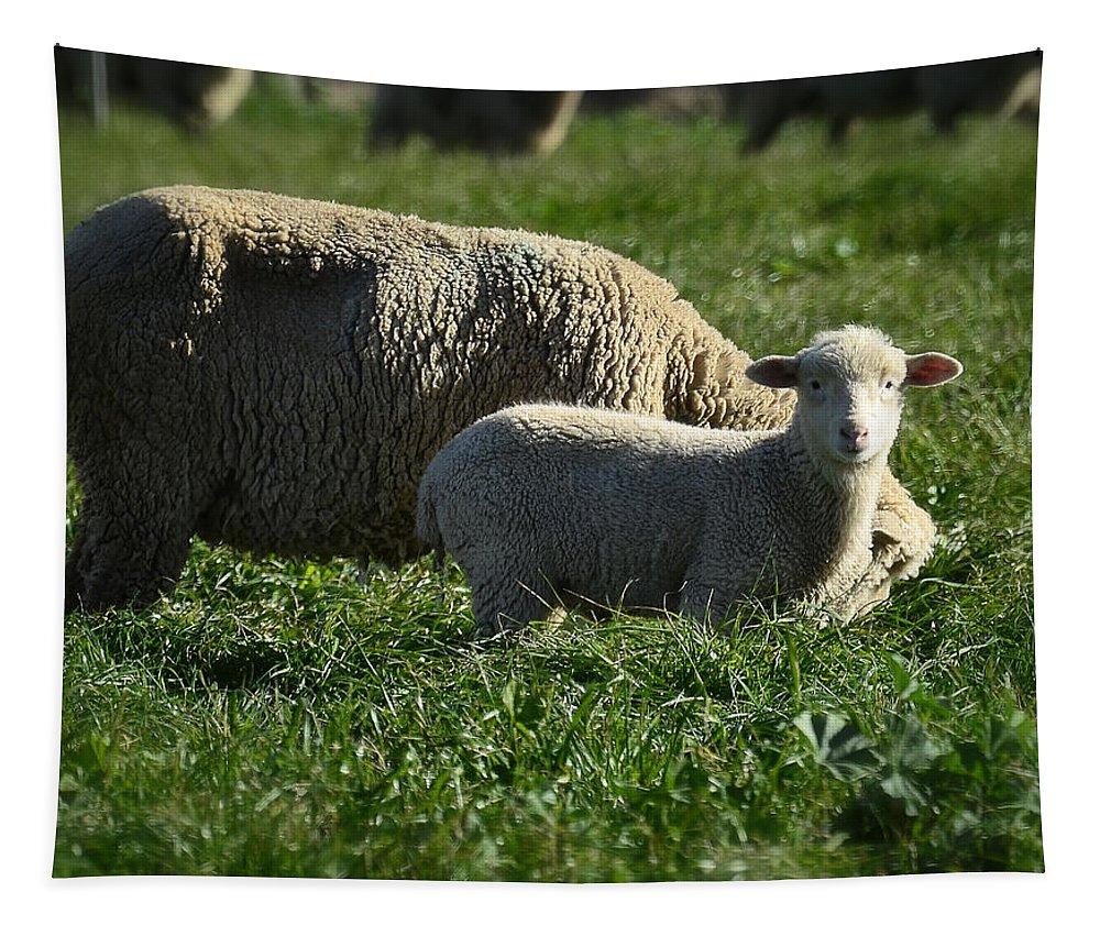Lamb Tapestry featuring the photograph Little Lamb by Saija Lehtonen