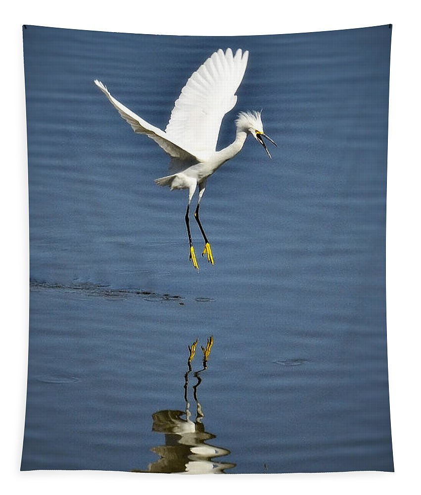 Snowy White Egret Tapestry featuring the photograph Look Out Below by Saija Lehtonen