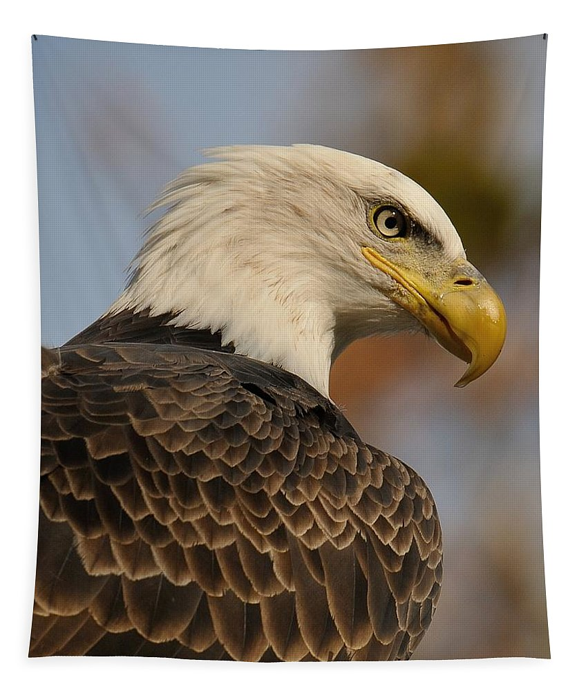 Bald Eagle Tapestry featuring the photograph Looking by Craig Leaper