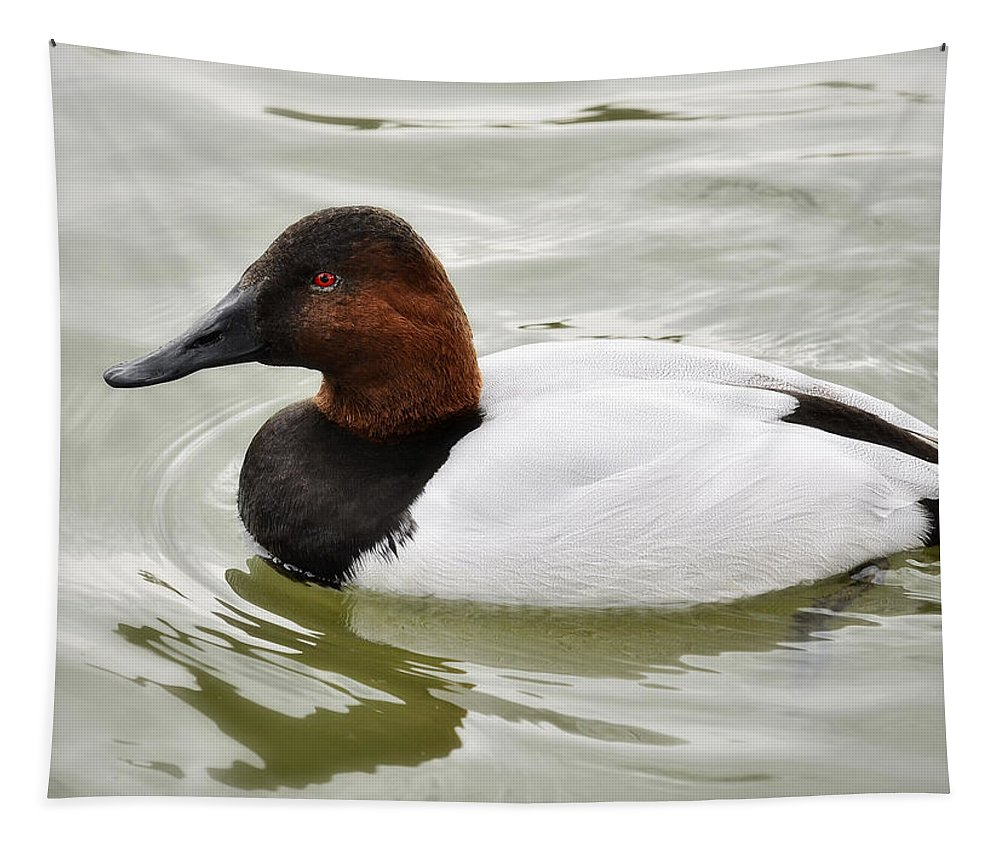 Canvasback Duck Tapestry featuring the photograph Male Canvasback Duck by Saija Lehtonen
