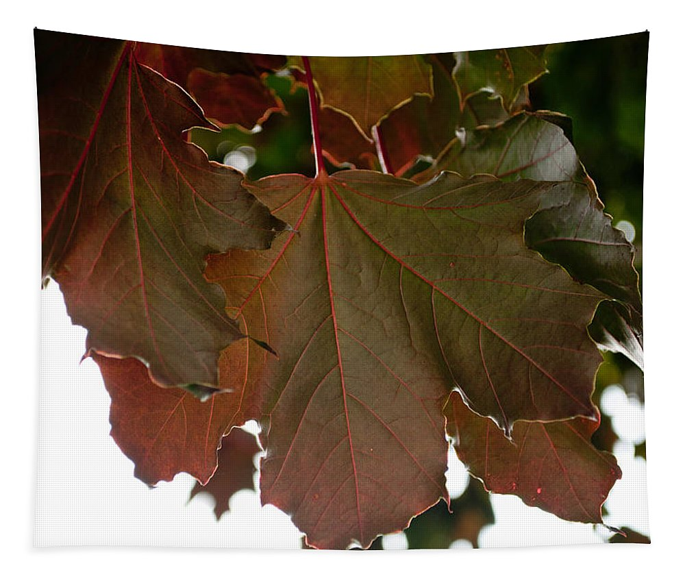 Maple Tree Tapestry featuring the photograph Maple 2 by Tikvah's Hope