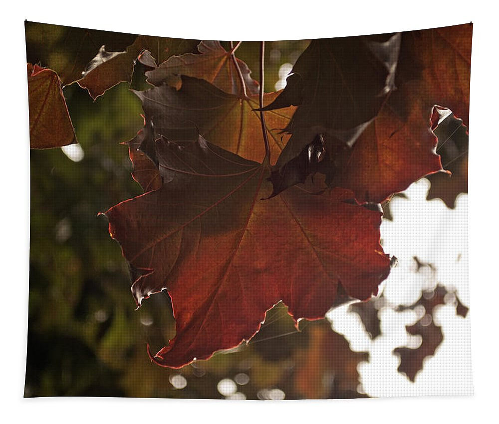 Tree Tapestry featuring the photograph Maple I by Tikvah's Hope