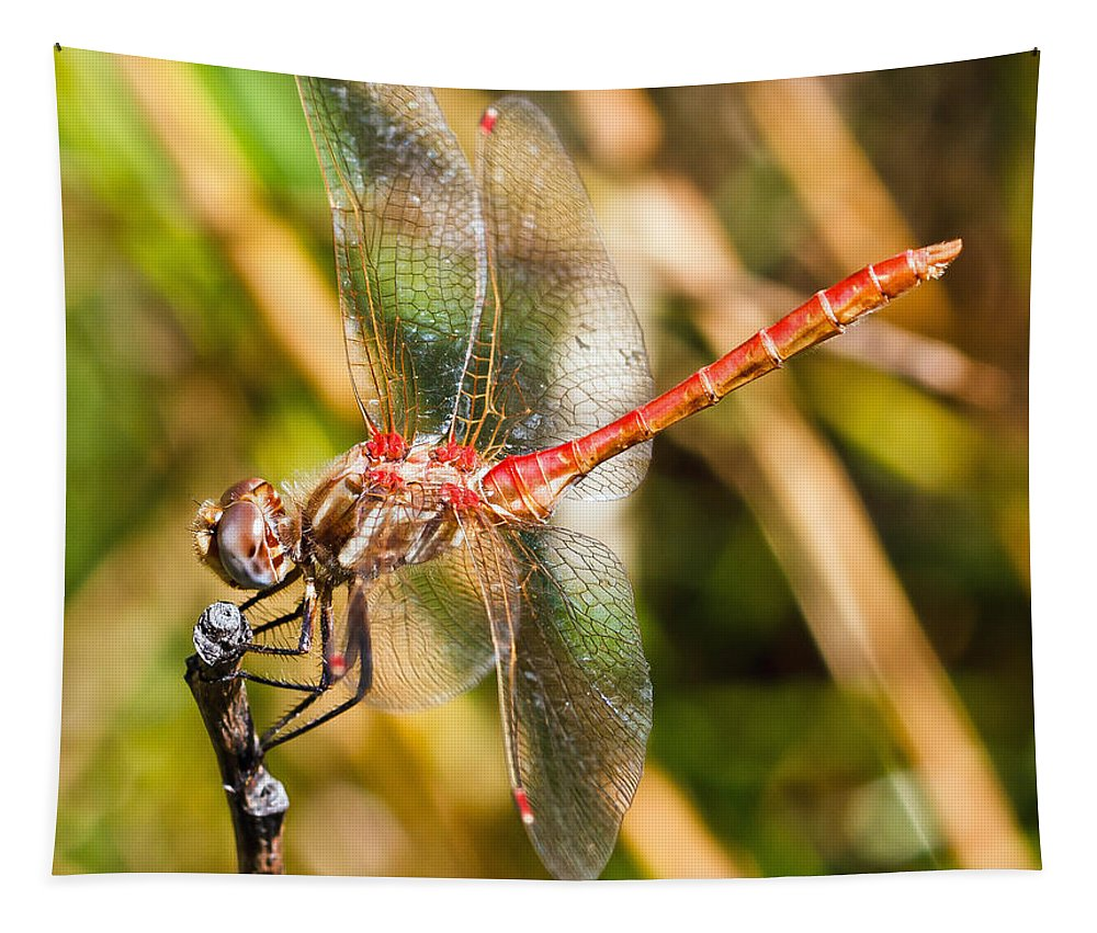 Meadowhawk Tapestry featuring the photograph Meadowhawk by Mitch Shindelbower