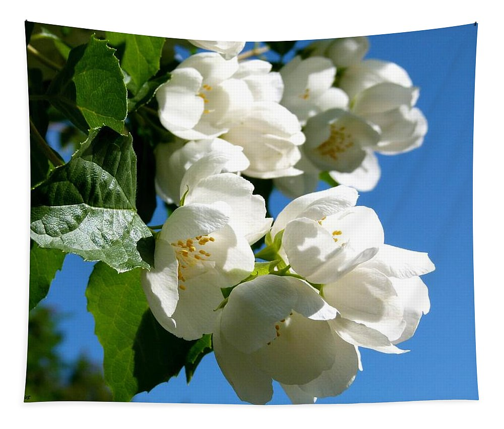Mock Orange Tapestry featuring the photograph Mock Orange 4 by Will Borden