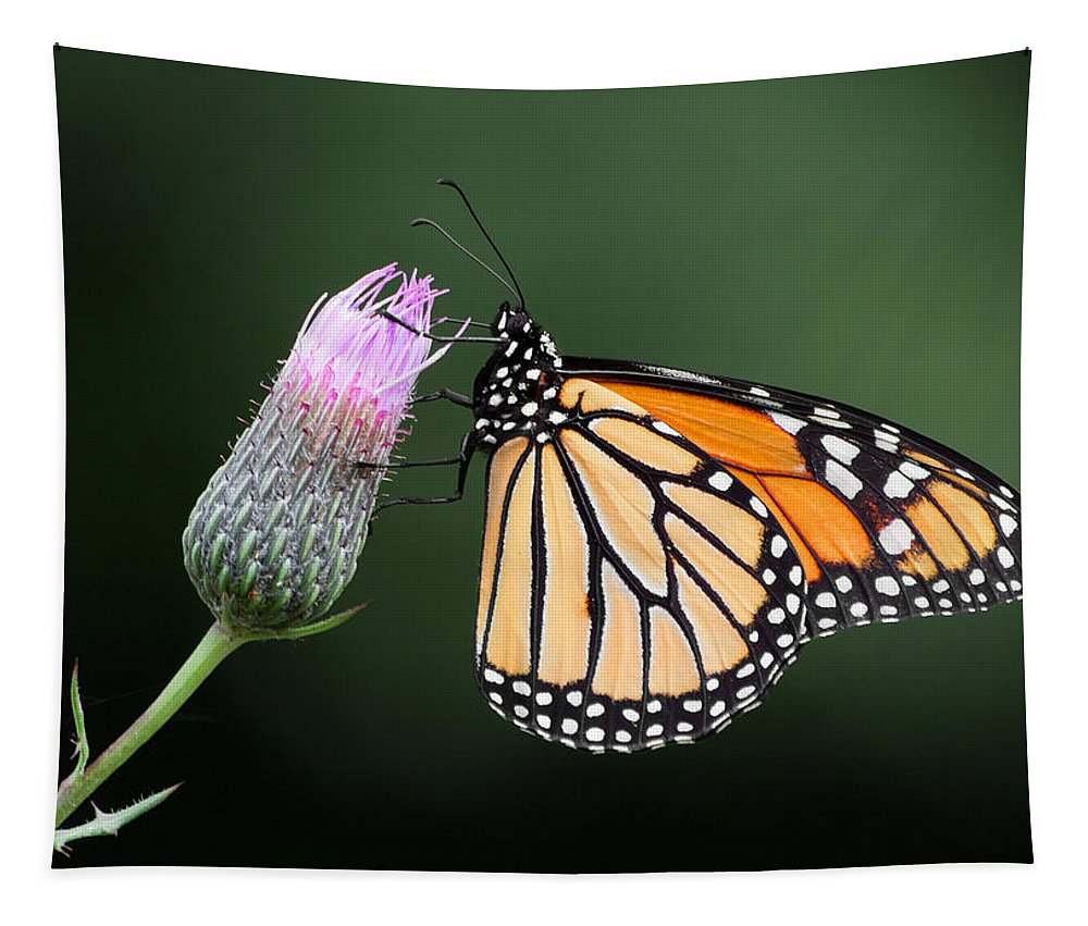 Monarch Tapestry featuring the photograph Monarch Butterfly by Dale Kincaid