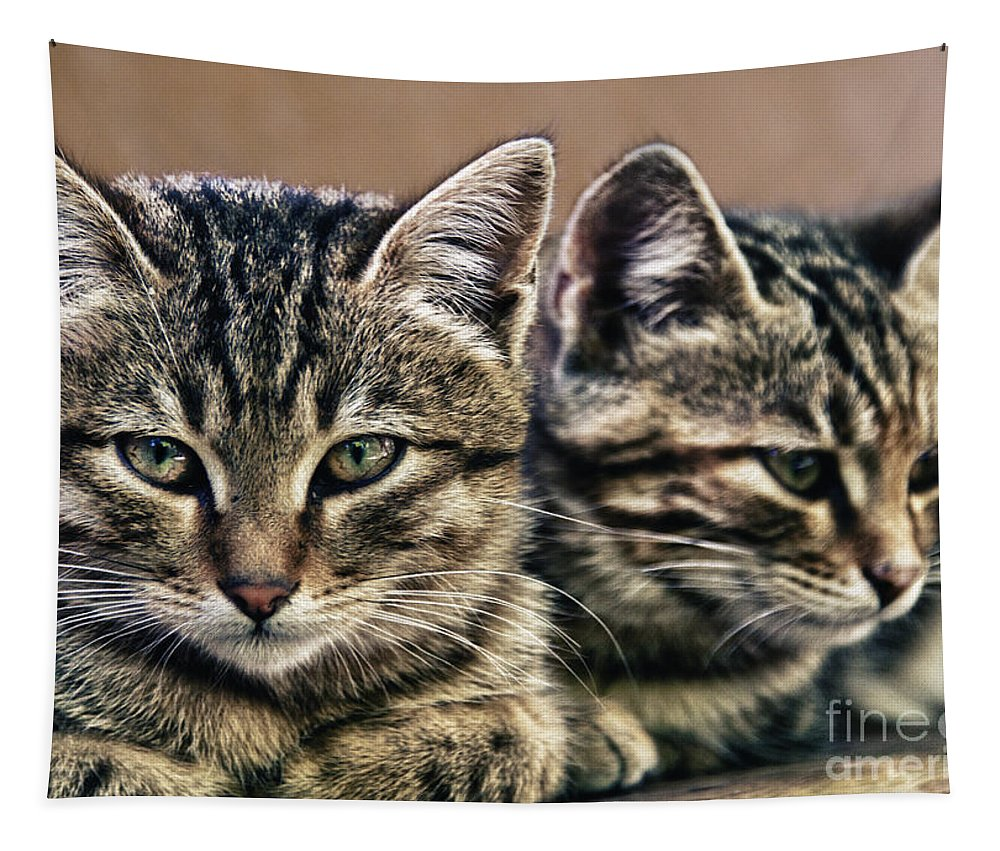 Adorable Tapestry featuring the photograph Mother And Child Wild Cats by Stelios Kleanthous