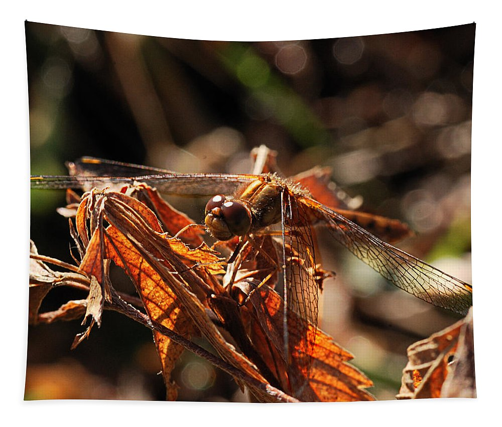 Nature Tapestry featuring the photograph Ms Damselfly A La Fall Mode by Susan Capuano