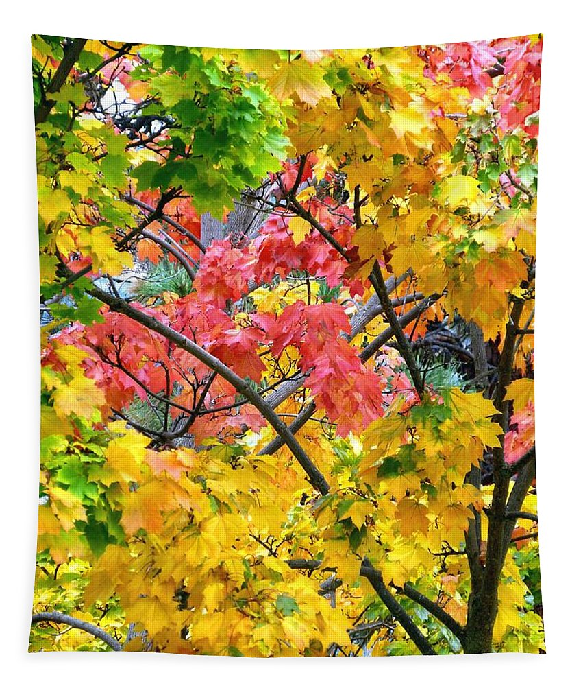 Multicolored Maple Tapestry featuring the photograph Multicolored Maple by Will Borden