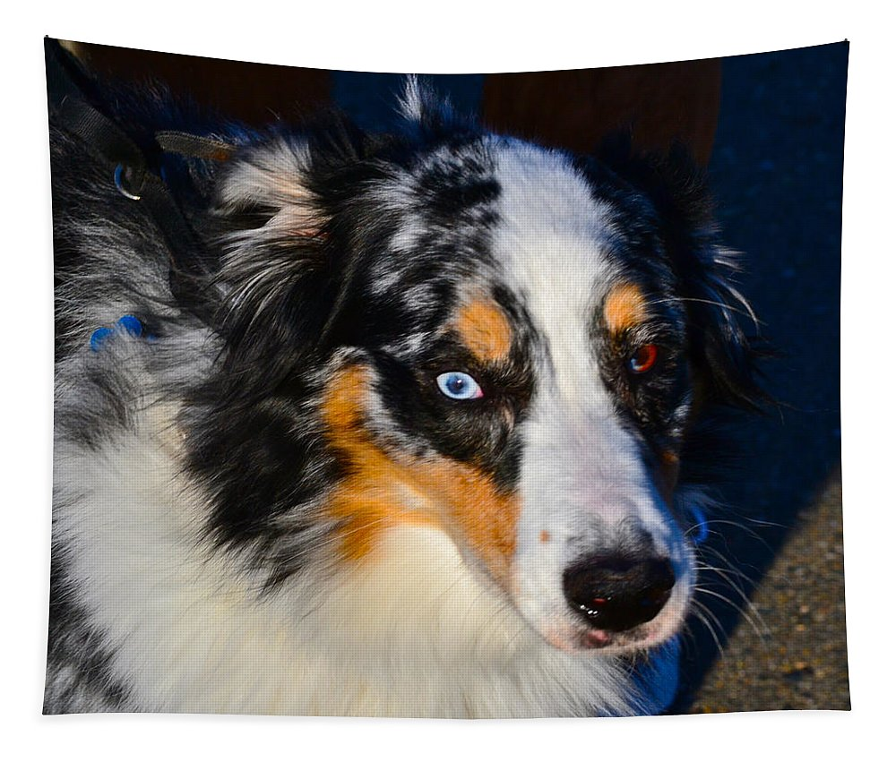 Dog Photographs Tapestry featuring the photograph My Brown Eyes Blue 2 by Bill Owen