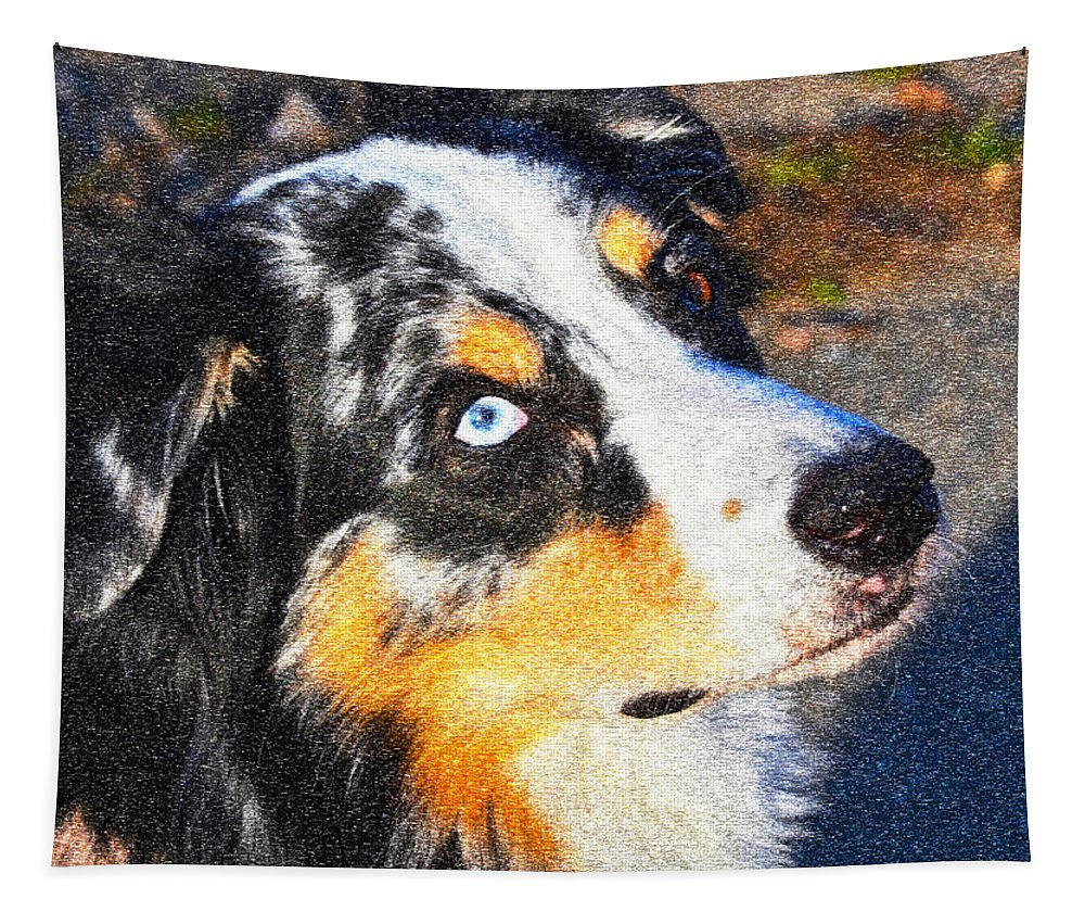 Dog Photographs Tapestry featuring the photograph My Brown Eyes Blue 3 by Bill Owen