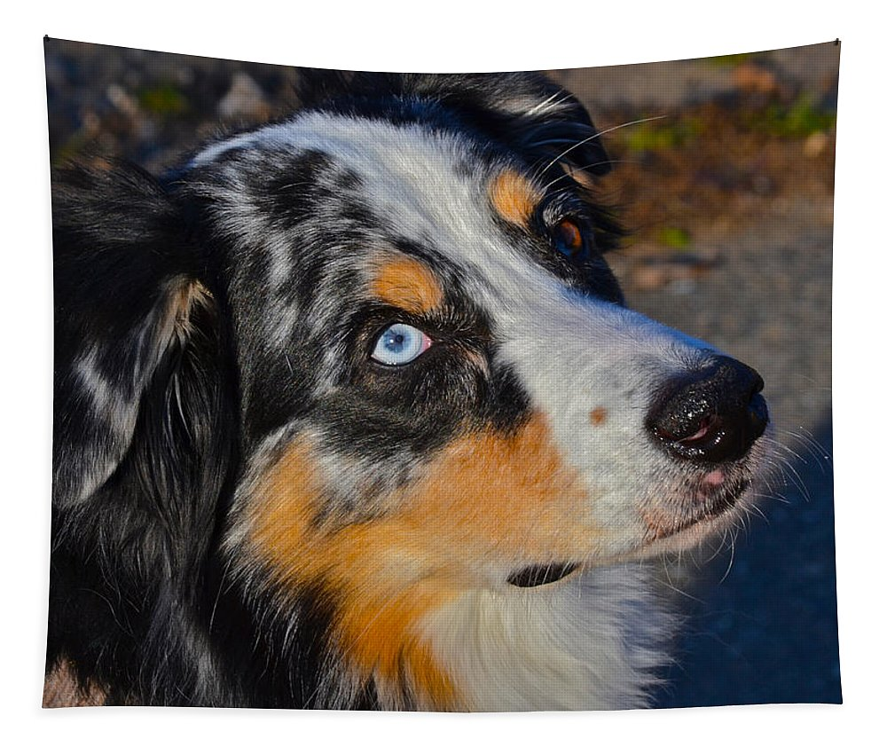 Dog Photographs Tapestry featuring the photograph My Brown Eyes Blue by Bill Owen