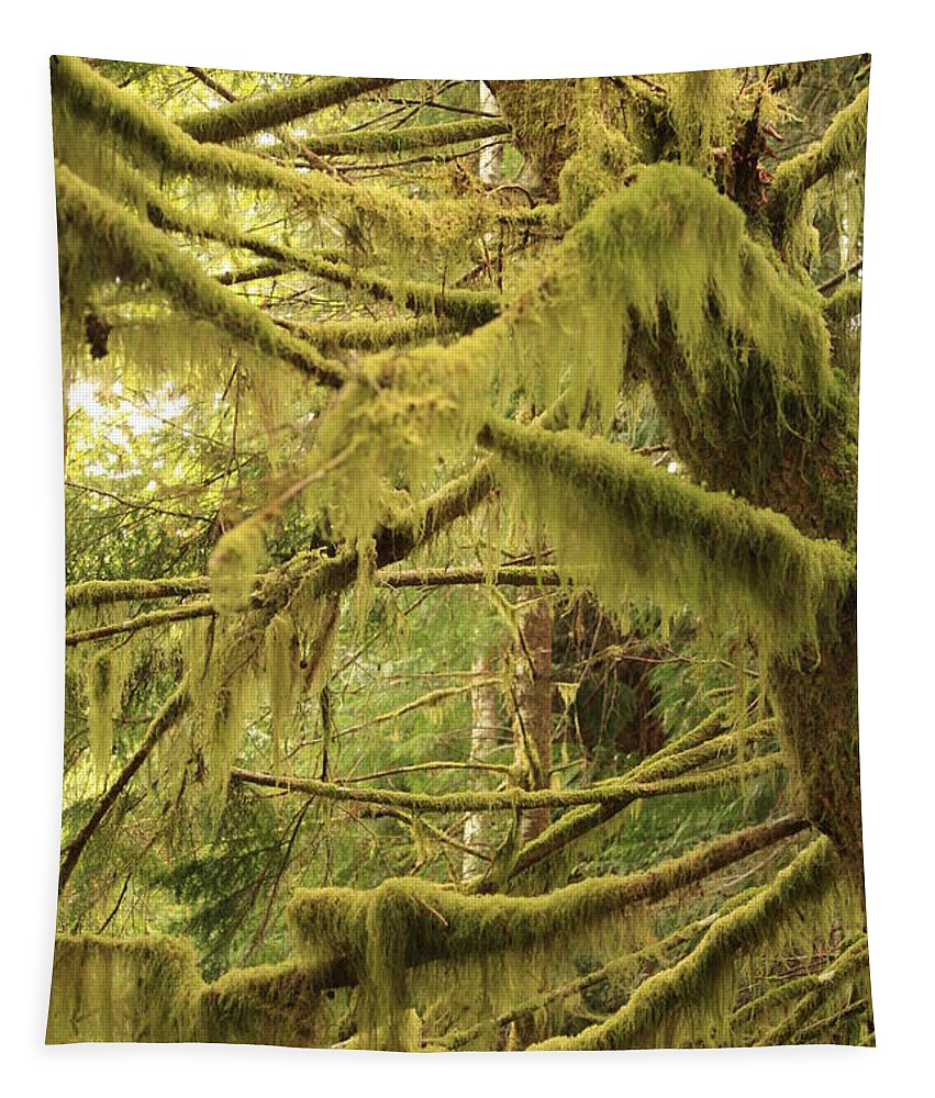 Northwest Tapestry featuring the photograph Mysterious Moss by Carol Groenen