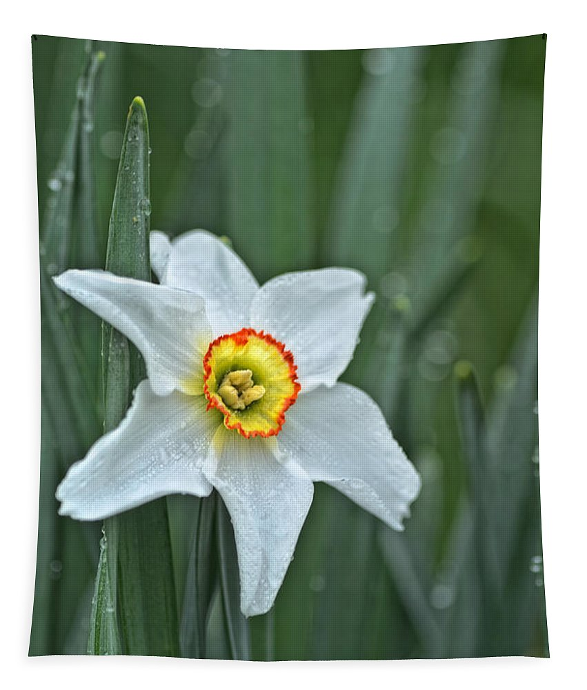 Flowers Tapestry featuring the photograph Narcissus In The Rain by Susan Capuano