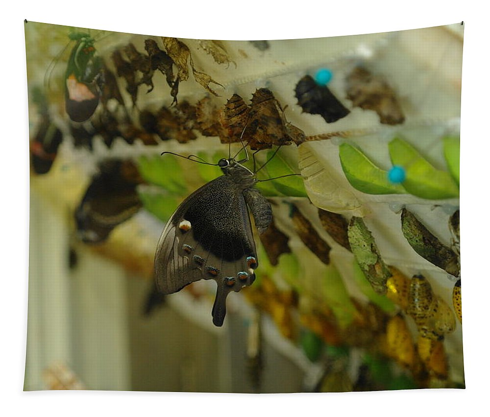 Insects Tapestry featuring the photograph Newborn At The Butterfly Factory by Jeff Swan