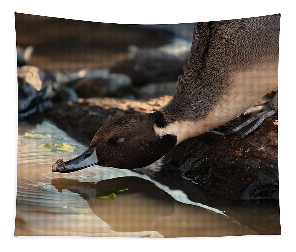 Northern Pintail Tapestry featuring the photograph Northern Pintail by Karol Livote