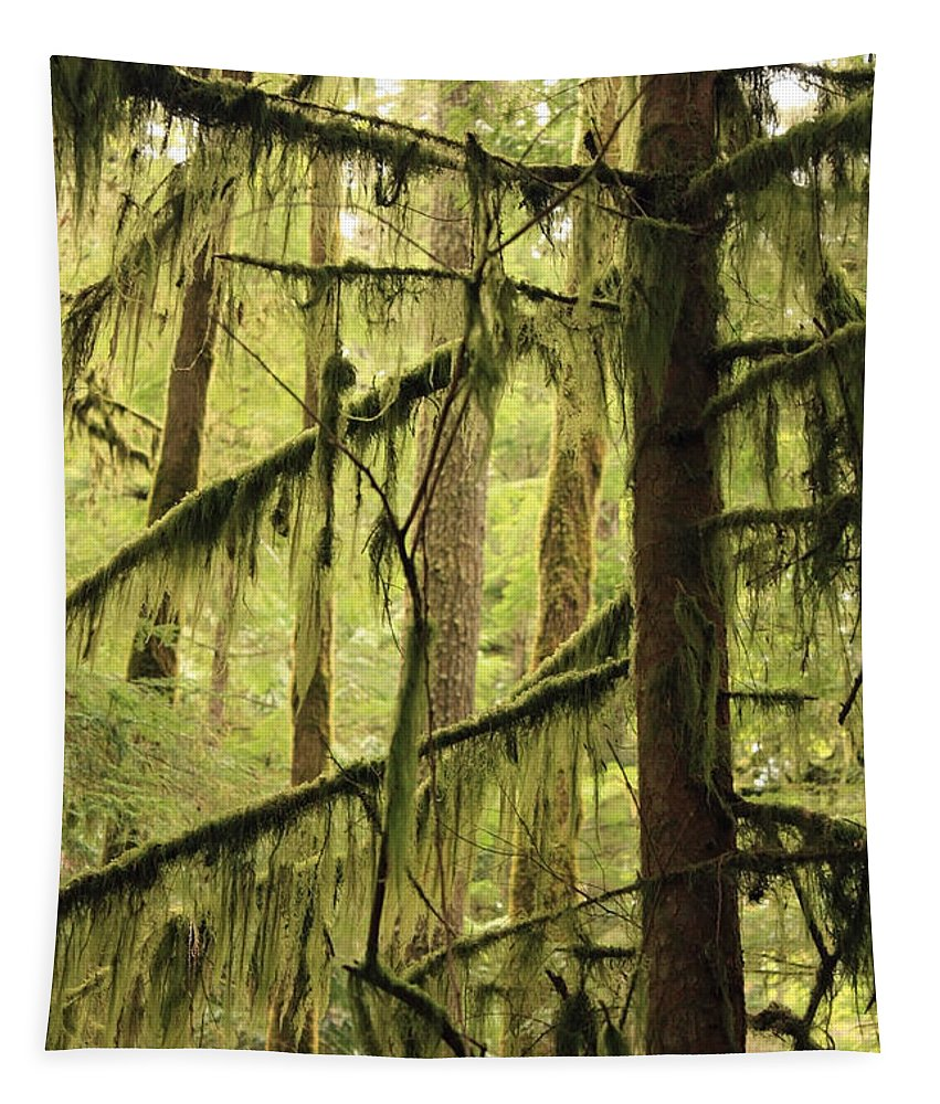 Northwest Tapestry featuring the photograph Northwest Mossy Tree by Carol Groenen