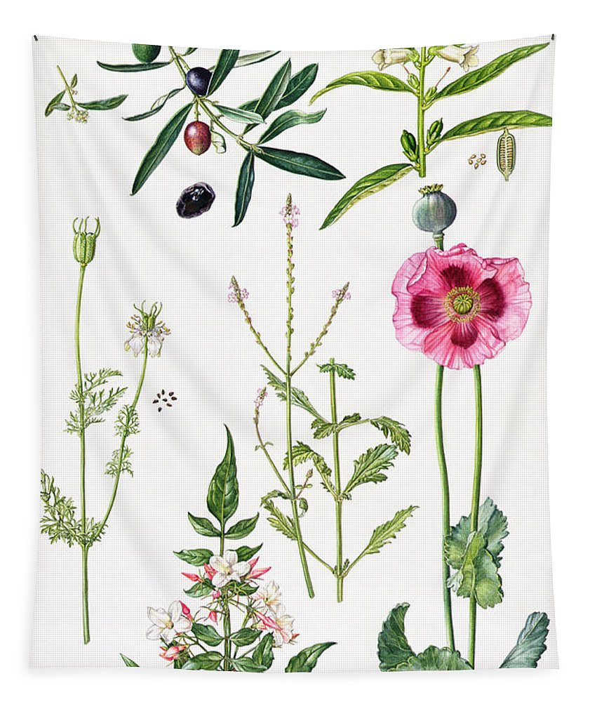 Sesame; Black; Cumin; Olive; Vervain; White; Jasmine; Herb; Botanical; Herbs; Opium Poppy; Olives; Leaf; Leafs; Flower; Flowering Tapestry featuring the painting Opium Poppy And Other Plants by Elizabeth Rice