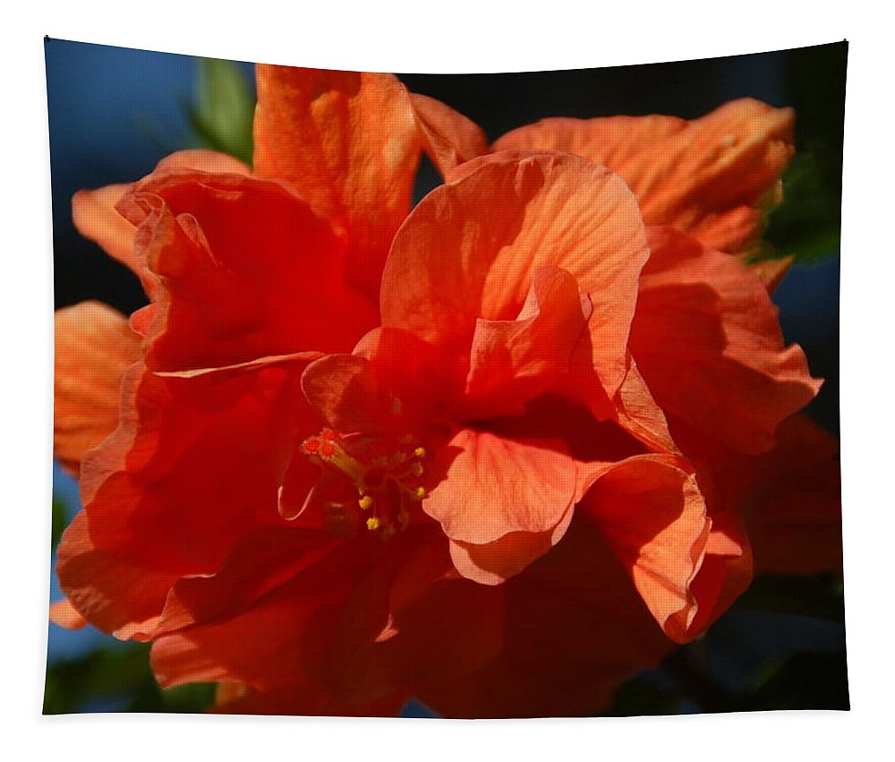 Hibiscus Tapestry featuring the photograph Orange Hibiscus by Aimee L Maher ALM GALLERY