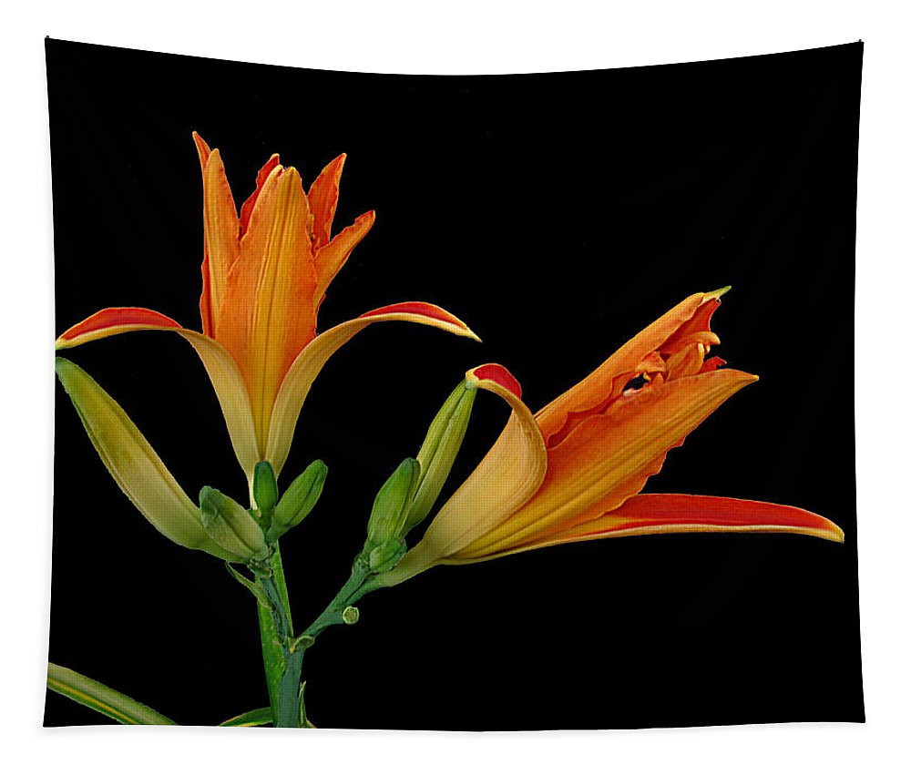 Lily Tapestry featuring the photograph Orange Lily On Black by Joyce Dickens