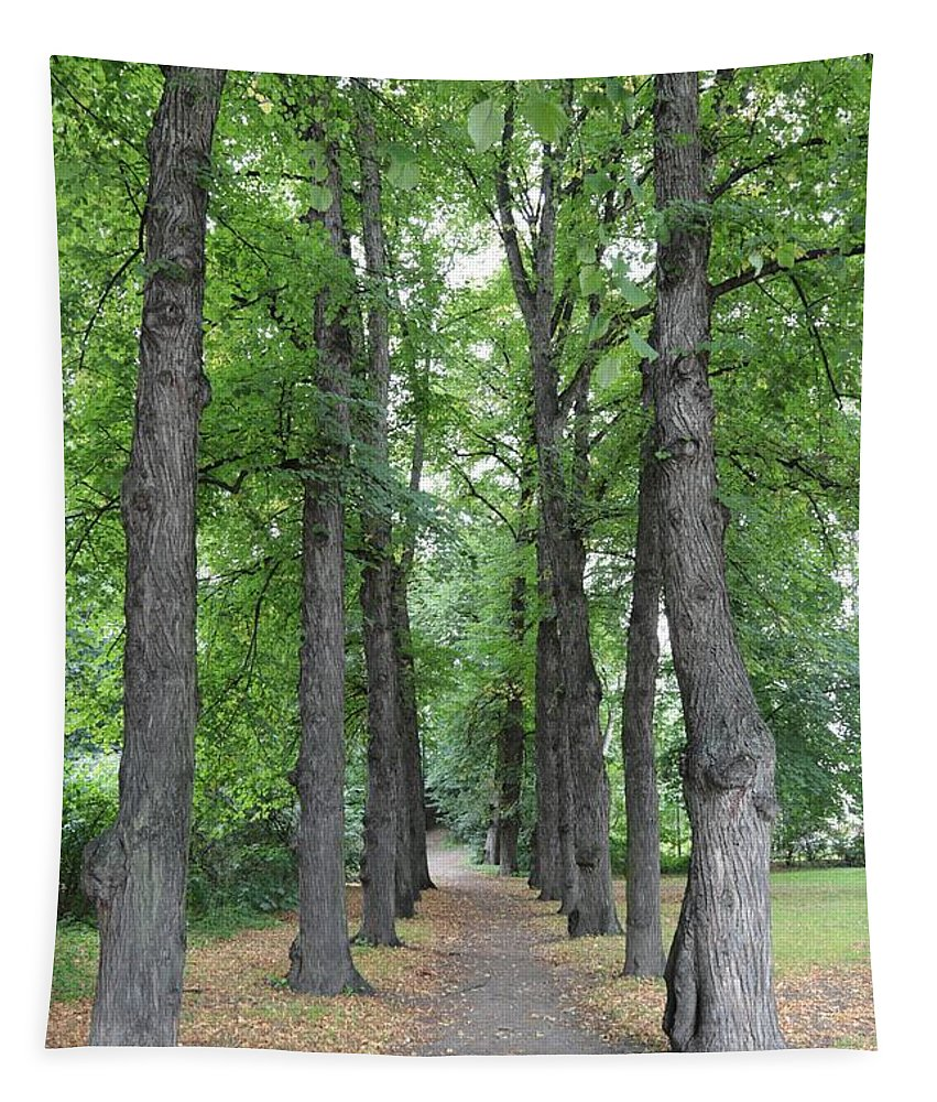 Trees Tapestry featuring the photograph Oslo Trees by Carol Groenen