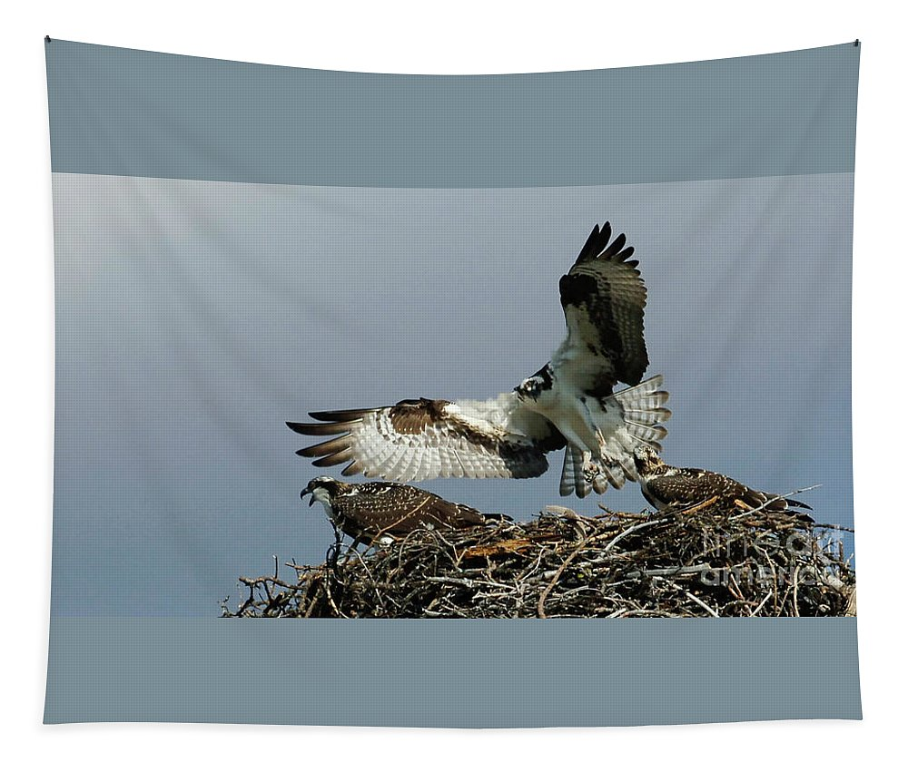 Osprey Tapestry featuring the photograph Osprey 2 by Bob Christopher